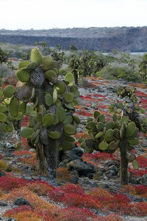 South Plaza, Islas Plaza, Galapagos Islands 305.jpg
