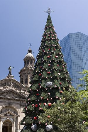 Catedral and Xmas tree.jpg