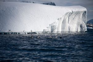 Paradise Bay, Lemaire Channel, Antarctica 647.jpg