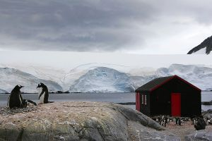 c81-Port Lockroy red shed.jpg