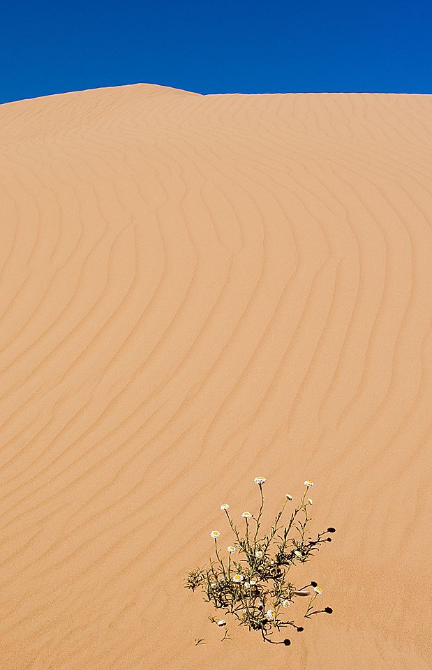 Perry Sand Hills 2.jpg