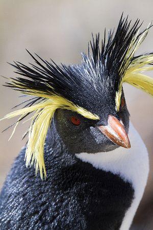 201203_Nightingale_Island_0316.jpg