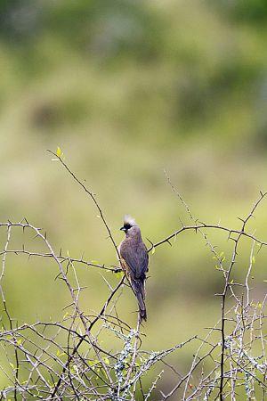 201203_kwandwe_2903_birds_0515.jpg