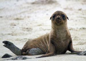Sombero Chino, Galapagos 061.jpg