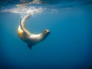 Tagus Cove, Isabella Island, Galapagos 213.jpg