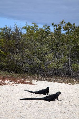 Bacchus Beach, Galapagos 028.jpg