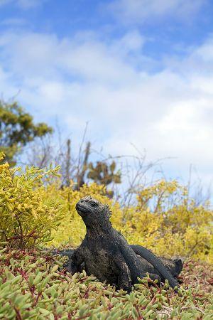 Dragon Hill, Santa Cruz Island, Galapagos 022.jpg