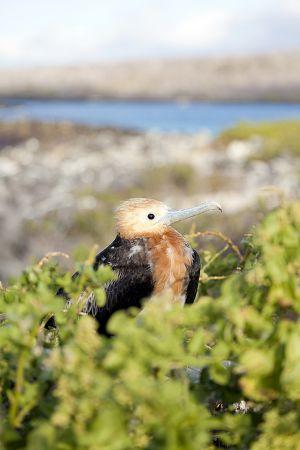 Isla Lobos, Galapagos Islands 056.jpg