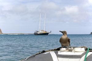 Punta Pitt, San Christobel, Galapagos Islands 071.jpg