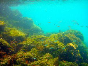 Sombero Chino, Galapagos 155.jpg