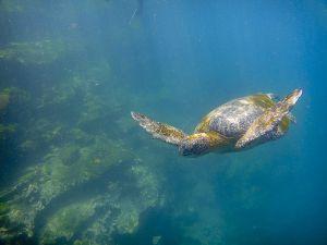 Tagus Cove, Isabella Island, Galapagos 133.jpg