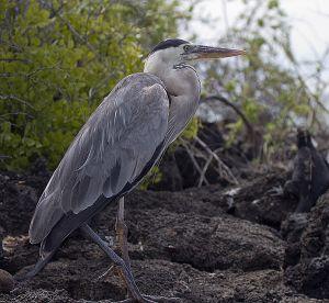 Dragon Hill, Santa Cruz Island, Galapagos 066.jpg