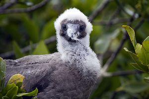 Genovesa Island, Galapagos 328.jpg