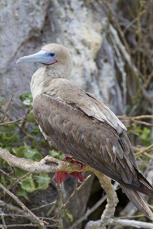 Genovesa Island, Galapagos 348.jpg