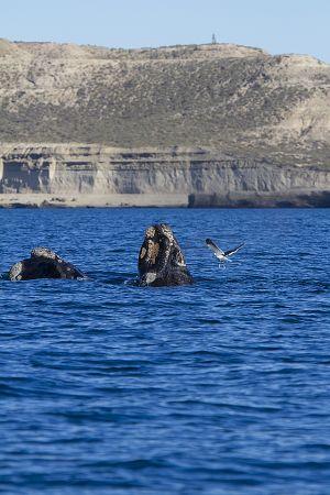 Argentina; Peninsula Valdes; Puerto Madryn;