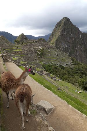 Cusco, Sacred Valley, Machu Picchu 233.jpg