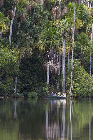Reserva Nacional Tambopata 559.jpg