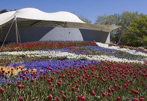 Field of flowers 2.jpg