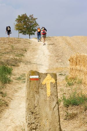 DIG-Camino-Eunate.jpg
