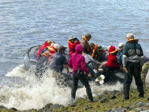 201203_Inaccessible_Island_0032.jpg